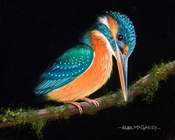 Watching Kingfisher by Alex McGarry - Original Painting, Canvas on Board sized 10x8 inches. Available from Whitewall Galleries